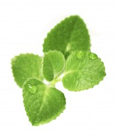 Small green plant with water drops isolated on th white